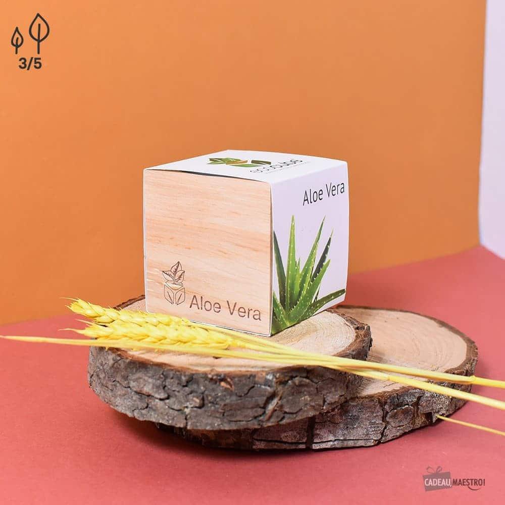 EcoCube Aloe Vera