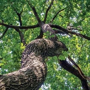 Offrir un arbre